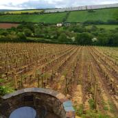 The vineyard operates a wine bar where you can enjoy a glass overlooking the gentle slopes of vines