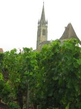 Vines with Chateau St. Pierre in the background (in Pomerol) — in Pomerol.