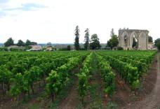 Vines and history... La Porte Brunet