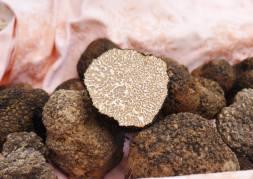 Fresh black truffles