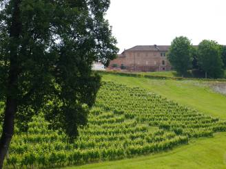 View of the Ceretto vineyard & winery