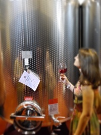 The young Cerretta 2013 still in steel tank
