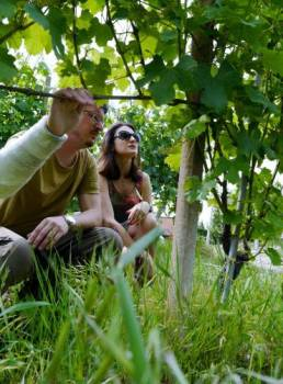 Admiring the vines of Cerretta vineyard