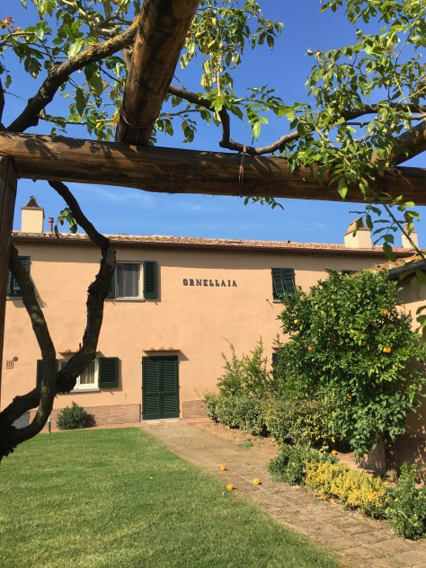 Ornellaia gardens