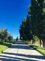 Nature at Ca'Marcanda estate