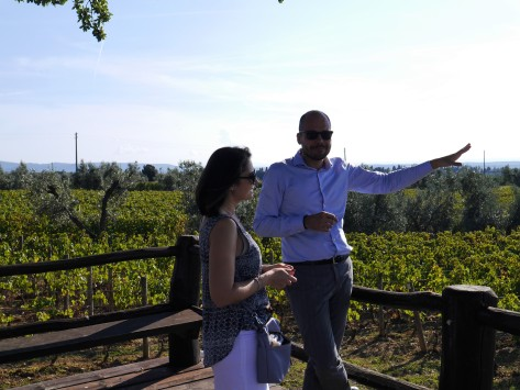 Bellaria vineyard