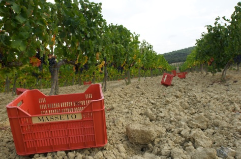 masseto vineyard
