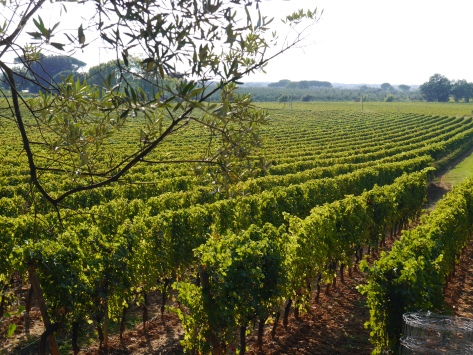 Michele Satta vineyard