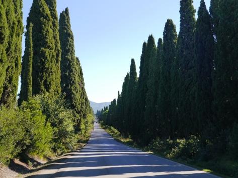cypress alley bolgheri