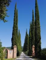The grand entrance to the Giovanni Chiappini estate
