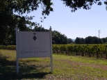 Vineyards of Antinori's Guado al Tasso estate